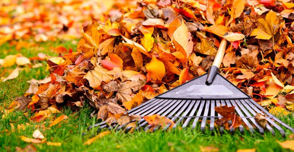 "A ""Do This, Not That"" List For Fall Yard Clean Up"