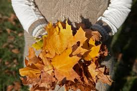 5 Fall Yard Maintenance Tips
