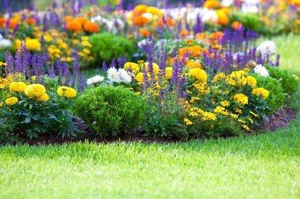 Tips for Summer Garden Success