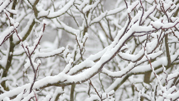 Protecting Your Trees From Cold Damage