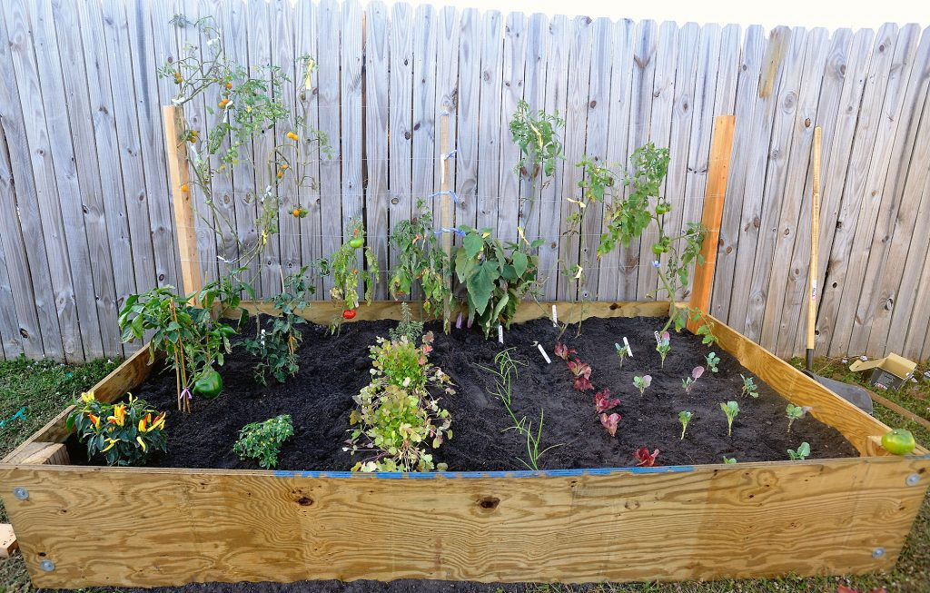 Tips for Successful Container Vegetable Gardening