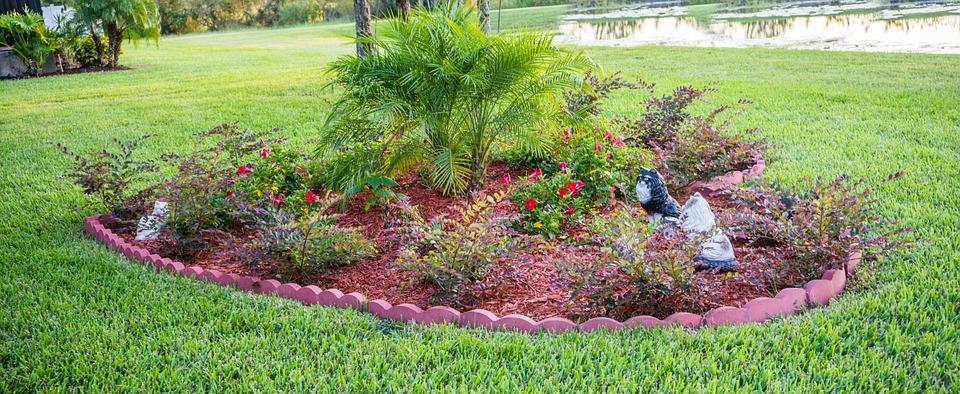 Beginner Gardening Tips for Beautiful Landscapes