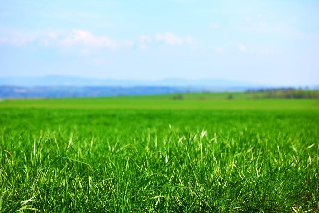 green grass healthy soil