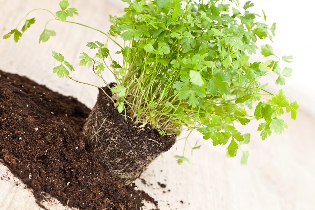 Understanding the Soil Profile and How it Affects Plant Growth