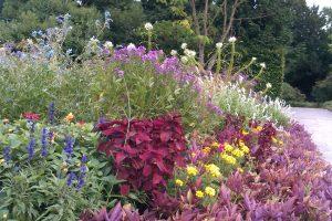 late summer blooming perennials