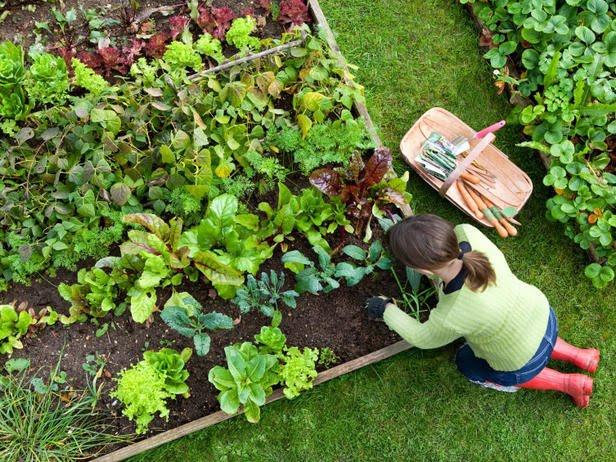 Beginner's Guide to Backyard Vegetable Gardens