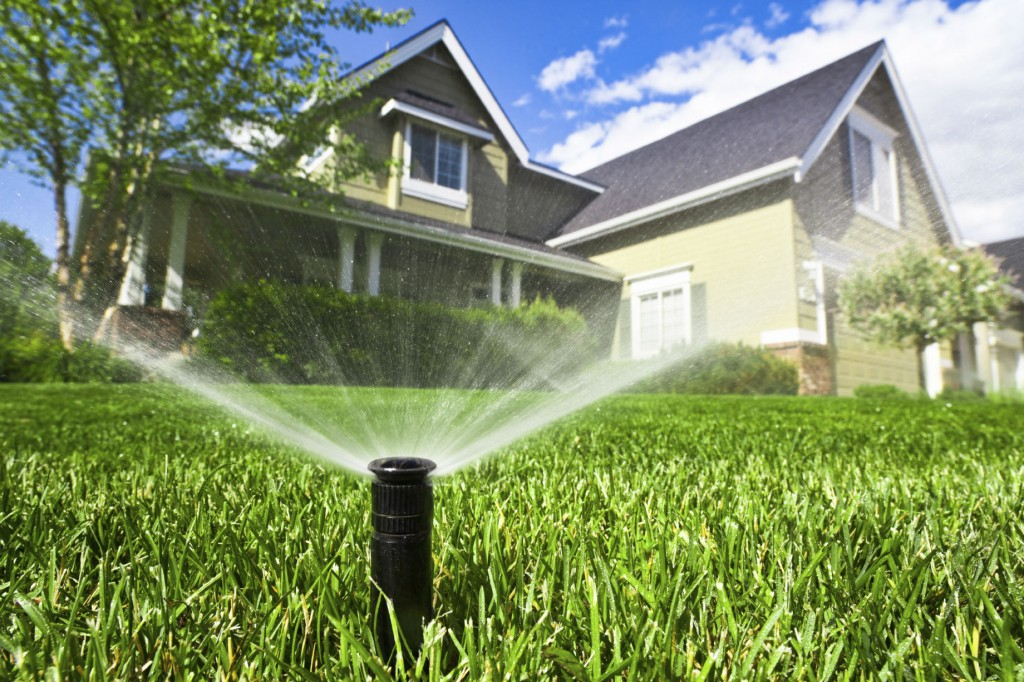 Tips to Save Water While Taking Care of Your Landscape