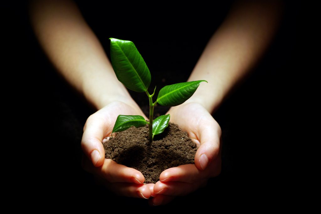 plants and soil